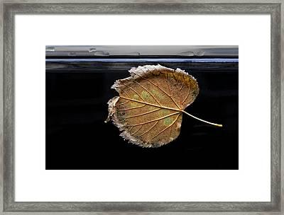 Stuck On You Framed Print by Robert Ullmann