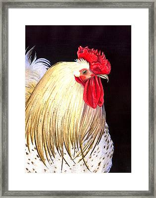 Studdley Framed Print by Catherine G McElroy