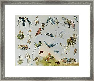 Studies Of Birds Framed Print by MotionAge Designs