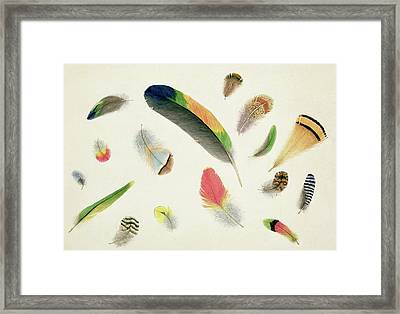 Studies Of Feathers Framed Print by Anne Bowen