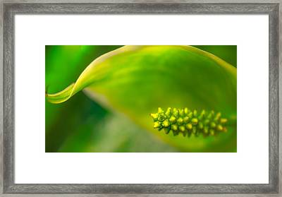 Studs And Curl Framed Print
