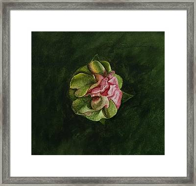 Study For Cactus Bloom Framed Print by C Wilton Simmons Jr