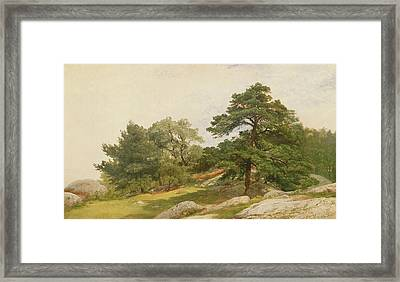 Study For Trees On Beverly Coast Framed Print by John Frederick Kensett