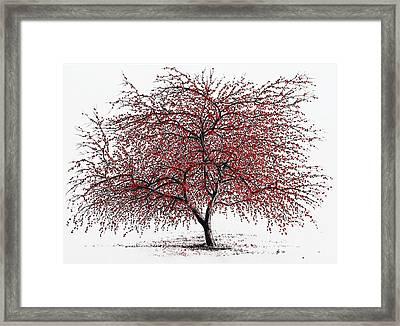 Study Of A Choke Cherry Tree Framed Print