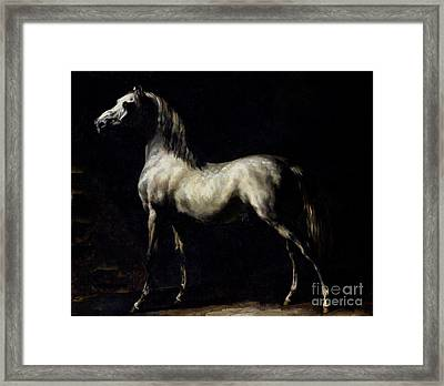 Study Of A Dapple Grey Framed Print