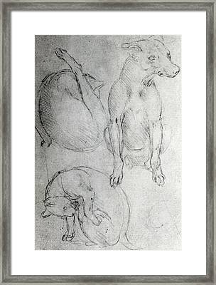 Study Of A Dog And A Cat Framed Print by Leonardo da Vinci