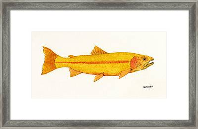 Framed Print featuring the painting Study Of A Golden Rainbow Trout by Thom Glace
