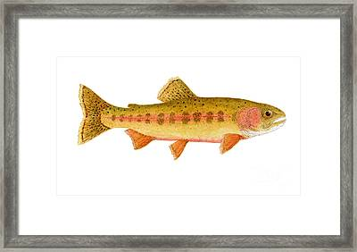 Framed Print featuring the painting Study Of A Golden Trout by Thom Glace