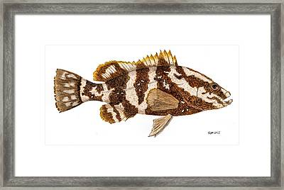 Framed Print featuring the painting 'study Of A Nassau Grouper' by Thom Glace