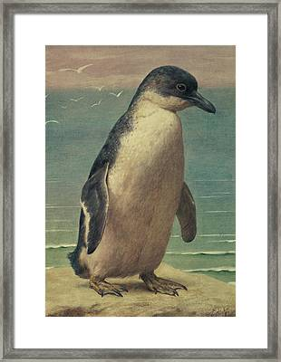 Study Of A Penguin Framed Print