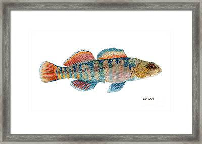 Framed Print featuring the painting Study Of A Rainbow Darter by Thom Glace