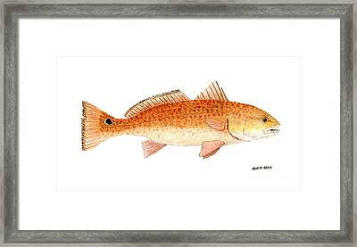Framed Print featuring the painting Study Of A Redfish  by Thom Glace