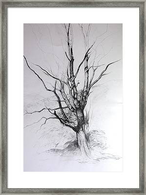 Study Of A Tree Framed Print by Harry Robertson