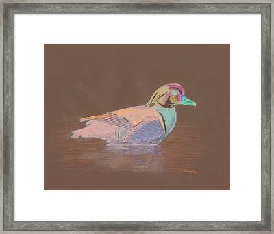 Study Of A Wood Duck Framed Print by Cynthia  Lanka
