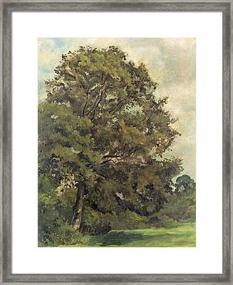 Study Of An Ash Tree Framed Print by Lionel Constable