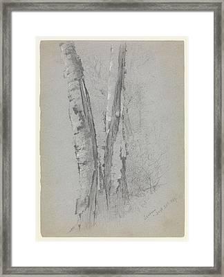 Study Of Birch Trunks Scribners' Framed Print