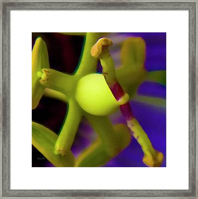 Study Of Pistil And Stamen Framed Print by Betsy Knapp