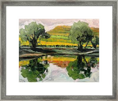 Study Of Reflections And Vineyard Framed Print