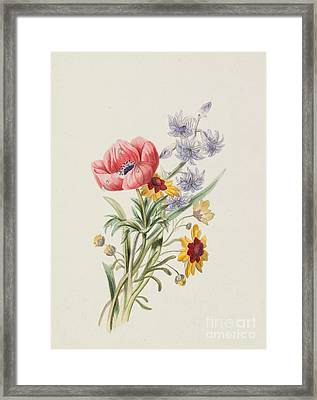 Study Of Wild Flowers Framed Print by English School
