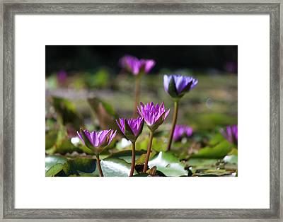 Framed Print featuring the photograph Stuff Of Dreams by Suzanne Gaff