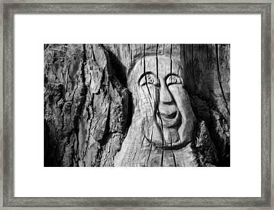 Stump Face 3 Framed Print