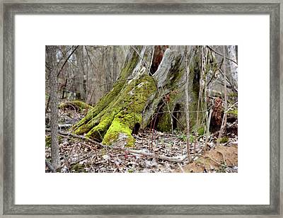 Stump With Moss Framed Print by Sean Seal