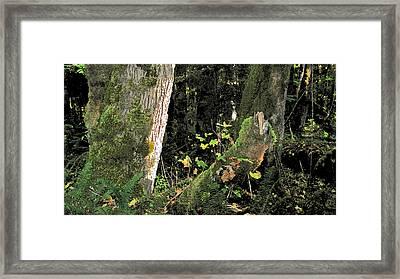 Stump Wyeth Framed Print by Larry Darnell