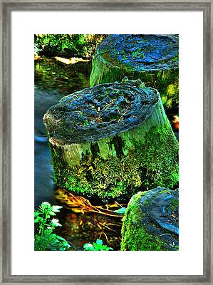 Stumped Framed Print by Tom Melo
