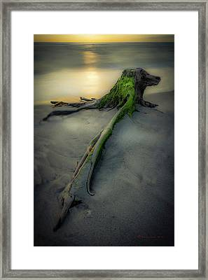 Stumps Edge Framed Print by Marvin Spates
