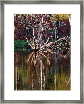 Stumpside Reflections Framed Print