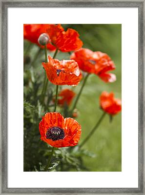 Stunners Framed Print by Rebecca Cozart