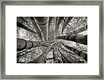 Stunning Bamboo Forest Framed Print