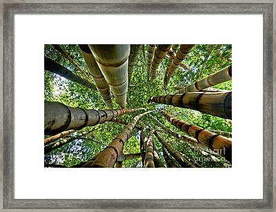 Stunning Bamboo Forest - Color Framed Print