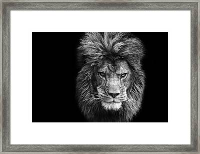 Stunning Black And White Portrait Of Barbary Lion On Black Background Framed Print by Matthew Gibson