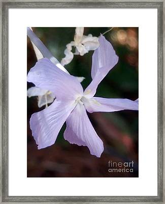 Stunning New Mexico Purple Wildflower Framed Print