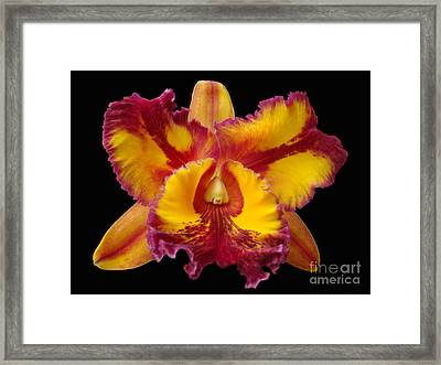 Stunning Orchid Closeup Framed Print by Sue Melvin