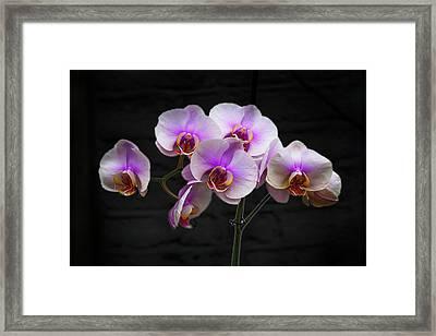Stunning Pink Orchids Framed Print