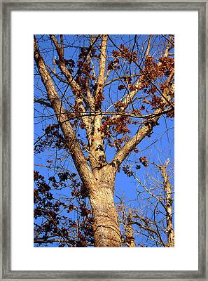Stunning Tree Framed Print