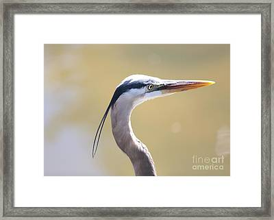 Styling Great Blue Heron Framed Print