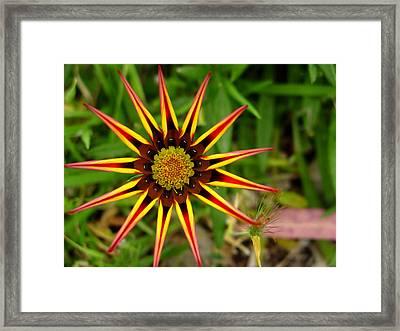 Stylish Petals Framed Print by Edan Chapman