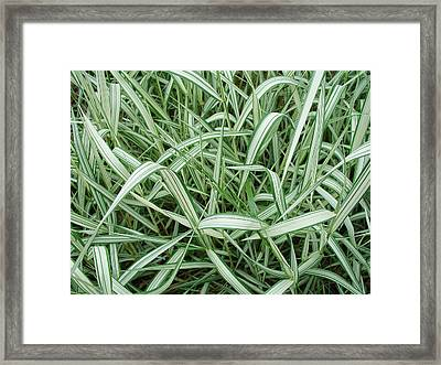 Sublime In Nature's Line Framed Print