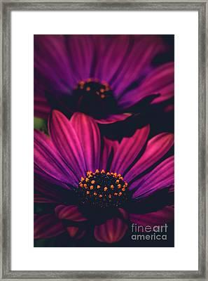 Sublime Framed Print by Sharon Mau