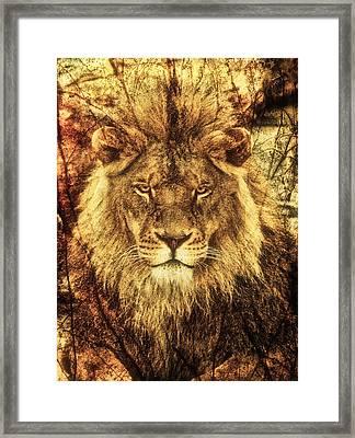 Subtle Lion Framed Print