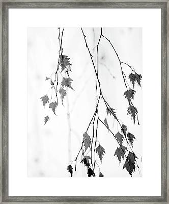 Framed Print featuring the photograph Subtle by Rebecca Cozart