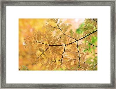 Subtle Shades Of Autumn Framed Print