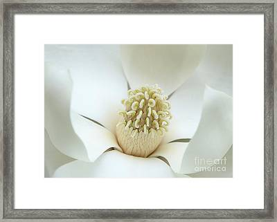 Subtle Southern Magnolia Framed Print by Carol Groenen