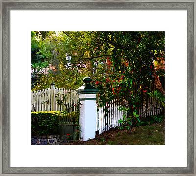 Subtropical Queensland Framed Print