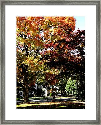 Suburban Autumn Framed Print by Susan Savad