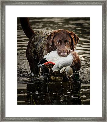 Successful Retrieve Framed Print by Jean Noren