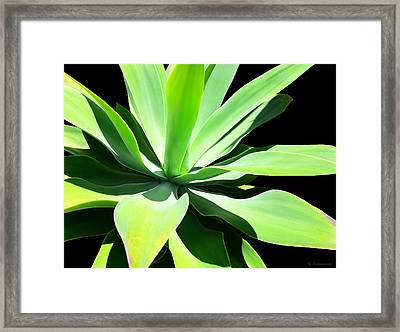 Succulent Agave Art By Sharon Cummings Framed Print